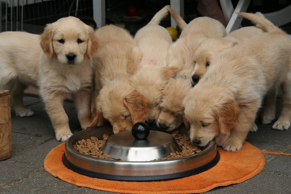 Does Your Dog's Diet Need To Include Supplements?